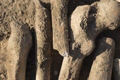 Huesos de la gente ejecutada por los turcos Exhumación de la gente ejecutada imágenes de archivo libres de regalías