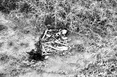 Huesos de perro Foto de archivo libre de regalías