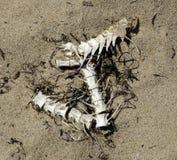 Huesos de pescados Imagen de archivo libre de regalías