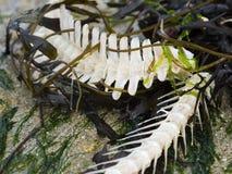Huesos de pescados lavados para arriba en la playa Fotos de archivo libres de regalías
