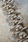 Huesos del cráneo Fotos de archivo