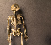Huesos del esqueleto de Víspera de Todos los Santos Imagen de archivo libre de regalías