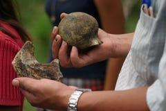 Huesos del mastodonte Imagen de archivo libre de regalías
