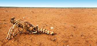 Huesos en el desierto Imagen de archivo libre de regalías
