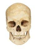Huesos esqueléticos del cráneo Fotos de archivo