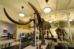 Huesos gigantescos