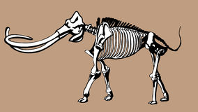 Huesos gigantescos Imagenes de archivo