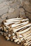 Huesos humanos antiguos Imágenes de archivo libres de regalías
