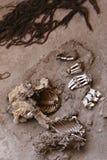 Huesos humanos antiguos Imagenes de archivo
