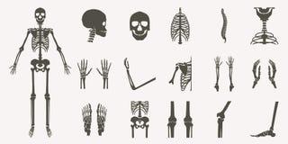 Huesos humanos ortopédicos y silueta esquelética libre illustration