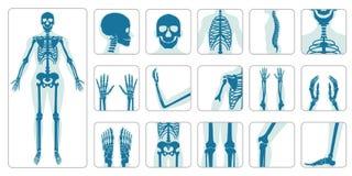 Huesos humanos ortopédicos y sistema esquelético del icono libre illustration