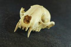 Huesos mortales imagen de archivo libre de regalías