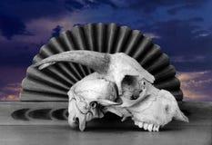 Huesos y cielo Fotografía de archivo libre de regalías