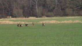 Huevas en el prado, fauna, libertad metrajes