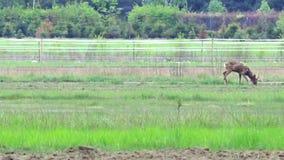 Huevas hermosas en el prado almacen de metraje de vídeo