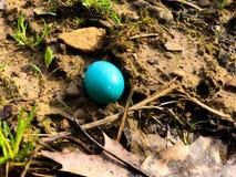 Huevo abandonado de los robin's imagen de archivo