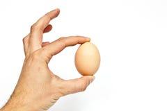 Huevo aislado en un fondo blanco Imagenes de archivo