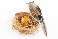 Huevo anaranjado de Pascua en jerarquía con el pájaro Imágenes de archivo libres de regalías