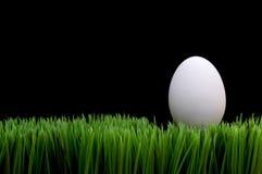 Huevo blanco en hierba Imagen de archivo