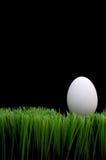 Huevo blanco en hierba Fotos de archivo libres de regalías