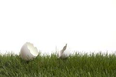 Huevo cáscara agrietado Imagen de archivo libre de regalías