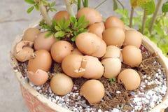 Huevo cáscara machacado Foto de archivo