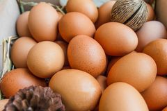 Huevo con el heno y el pino Imagen de archivo libre de regalías