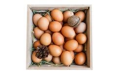 Huevo con el heno y el pino Foto de archivo libre de regalías