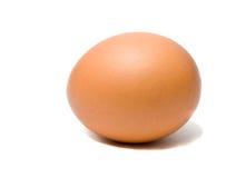 Huevo de Brown Imagen de archivo