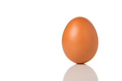 Huevo de Brown Imagenes de archivo
