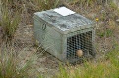Huevo de Brown en la trampa animal de la jaula Fotos de archivo