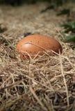 Huevo de Brown fresco foto de archivo libre de regalías