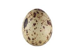 Huevo de codornices Fotos de archivo