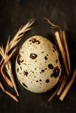 Huevo de codornices con cierre del heno para arriba (macro) en negro desde arriba Foto de archivo