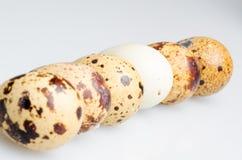 Huevo de codornices de Albefaction Fotos de archivo libres de regalías