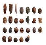 Huevo de diversa especie de insectos de palillo fotografía de archivo libre de regalías