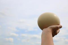 Huevo de la avestruz Fotos de archivo libres de regalías