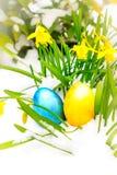 Huevo de Pascua azul y amarillo en la nieve con los narcisos Fotografía de archivo libre de regalías