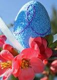 Huevo de Pascua azul y floración roja de las flores en resorte Imagenes de archivo