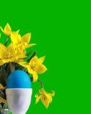Huevo de Pascua azul y tulipanes amarillos Fotos de archivo libres de regalías