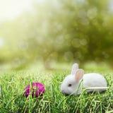 Huevo de Pascua con el conejito Fotos de archivo