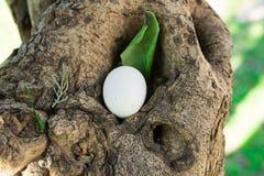 Huevo de Pascua decorativo blanco en hueco del árbol con la hoja verde, al aire libre fotos de archivo libres de regalías