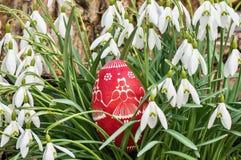 Huevo de Pascua decorativo rojo en césped con los snowdrops Imagen de archivo libre de regalías