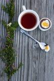 Huevo de Pascua del chocolate y taza de té Imágenes de archivo libres de regalías