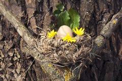 Huevo de Pascua en la jerarquía del pájaro Fotografía de archivo libre de regalías