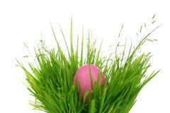 Huevo de Pascua ocultado en hierba Foto de archivo libre de regalías
