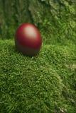 Huevo de Pascua rojo hermoso Imagen de archivo