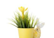 Huevo del conejito de pascua con la flor de la primavera Imagen de archivo libre de regalías
