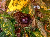 Huevo del pájaro foto de archivo