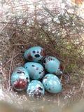 Huevo del pájaro fotos de archivo